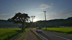 country road (tyodai) Tags: japan shiga   summer    7 ilce7 super wideheliar 15mm f45 aspherical iii