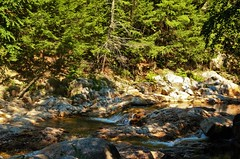 Mount Tabor River (Sunset Master) Tags: river vermont trees green water nature earth rocks waterfall ice cold texture light brown peaceful summer landscape detail wood pine needles relaxing fine art nikon d7000 elijah adams