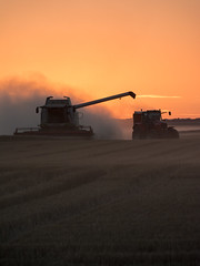 Wheat field (F.eelphoto.fr) Tags: rural wheat bl harvest campagne moisson sunset soleil sun countryside france picardie crales champ agriculture