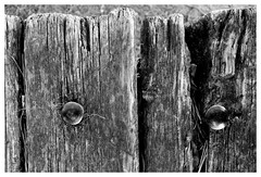 III (Pascal.M (bong.13)) Tags: texture bouchesdurhone bois frigolet table rivets graphisme graphique france provence noiretblanc blackandwhite sonyrx100