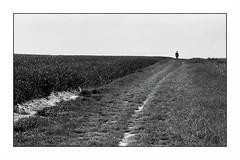 Dans le Val d'Oise (Punkrocker*) Tags: leica iiif ltm screwmount elmar 90mm 904 film fuji neopan acros 100 nb bwfp landscapes paysage valdoise france
