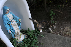 the cat who visited Mary and me  12 (Violentz) Tags: cat virginmarystatue statue virginmary kitty summerday