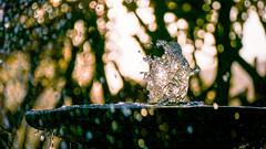 frozen water (Stefan Giese) Tags: namibia afrika africa okaukejo wasser reflection water bokeh unschärfe hintergrund tropfen panasonic fz1000