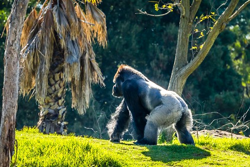 Werribee Zoo-86