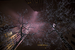 Lights in the Trees, Like Stars in the Sky v3.0 (gimmeocean) Tags: nyc ny newyork fog night lights manhattan foggy rockefellercenter midtown 30rock rockefellerplaza 30rockefellerplaza