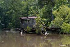RIVER SHACK (t.rex7000) Tags: camp river fishing cabin alabama bayou swamp shack mobiletensawdelta trex7000
