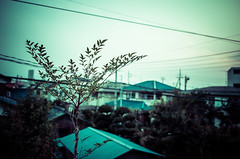 189/366 : Neighborhood (hidesax) Tags: leica trees houses sunset sky tree japan cloudy gray x neighborhood roofs wires saitama vario ageo 365project 366project 189366 hidesax 366project2016