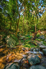 Tropical Mountain Stream #2 (FotoGrazio) Tags: jungle landscape peaceful nature water stream philippines trees mothernature beautiful scenic coconuttrees green fauna lush cleanwater tropical