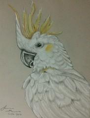 Cockatoo (laurengarver) Tags: bird art sketch pretty drawing pastel cockatoo