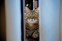 On threshold of the balcony door (Matja Skrinar) Tags: 100v10f