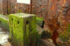 Groyne, Lowestoft (Stephen Toye) Tags: wood sea seaweed coast suffolk rust iron tide shingle pebbles coastline ironwork seashore groyne eastanglia lowestoft seadefence yellowochre luminousgreen eastofengland floodtide