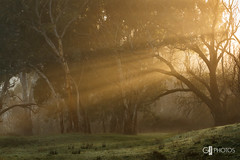 Morning light (Greg-Johnston) Tags: country countryside fog mist trees winter hahndorf southaustralia