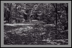 Reflections in the Woods (brev99) Tags: d7100 sigma1770os leatherwoodlake arkansas eurekasprings landscape trees water blackandwhite perfecteffects10 selenium tone woods forest trail reflections ononesoftware borders paintbucket