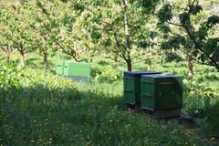 ckuchem-1264 (christine_kuchem) Tags: streuobstwiesenweg bienenstock streuobstwiese streuobst wiese obstbaum frhling frhjahr blte bltezeit obstbume