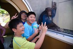 2016 北海道D6 4x6 3206 (chaochun777) Tags: 北海道 旭山 動物園 露營 自由行 猴子 長臂猿 猩猩 雲豹 花豹 老虎 獅子 北極熊 企鵝