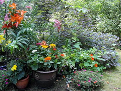 all together now (kexi) Tags: lilies flowers many colors red pink orange green garden gniazdowo poland polska samsung wb690 july 2015 instantfave