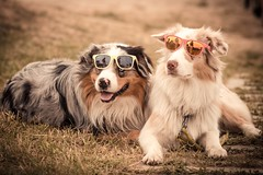 20150523-untitled-0345.jpg (xskyven) Tags: dog dogs animal funny feelthewheel