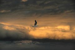 (Malena_c) Tags: sky clouds seagull explore cielo nubes gaviota soe 1000views blueribbonwinner abigfave anawesomeshot flickrdiamond