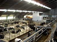 "Dairy Farm <a style = ""margin-left: 10px; fontstørrelse: 0.8em;"" href = ""http://www.flickr.com/photos/133150671@N06/18438591528/"" target = ""_ blank""> @ flickr </a>"