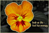 LIVE LIFE (Astral Will) Tags: life plant flower live pansy tolerance sermon hss selectivecoloring