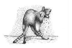 Levarsi di dosso... (Zz manipulation) Tags: art ink cat drawing gatto disegno ambrosioni zzmanipulation