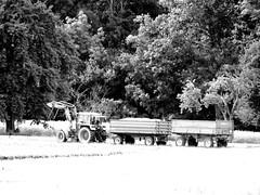 Harvest started - Die Getreideernte hat auch auf 500m Hhe am Schnbuchrand begonnen (eagle1effi) Tags: traktor harvest tbingen anhnger fendt getreide waldhuserost sx60