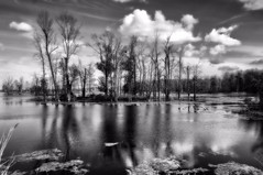 Iroquois Refuge B&W (Kerryjwagner) Tags: mono monochrome bw refuge iroquois clouds water marsh trees topaz
