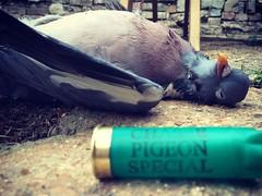 Lunch (Dave Harwood) Tags: shotgun 12bore bushcraft farming food shooting pigeon