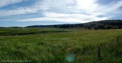 Contre-jour (brigeham34) Tags: rando cheminsdecompostelle viapodiensis gr65 domainelesauvage panorama paysage campagne boisetforts champsetptures prairiesfleuries gents vallonnements troupeau vaches buron contrejour chnerailles margeride hauteloire auvergne france fz45 eu