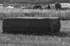 Bale (picturesbywalther) Tags: bale ballen heuballen nature agriculture landwirtschaft leica schwarzweiss blackwithe bw sw landscape landschaft schweiz switzerland gu solothurn oensingen feld field