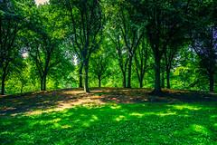 The enchanted hill (Arutemu) Tags: nyc ny sony sonya7r newyork newyorkcity nuevayork city america american a7r sigma 24mm summer urban usa us unitedstates centralpark park wideangle
