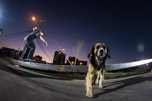 La calle, los perros y el skate
