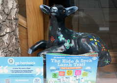 Basil (Cumberland Patriot) Tags: go herdwick goherdwick painted sheep cumbria cumbrian calvert trust charity basil lamb rathbones shop store window indoor keswick