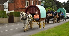 DSC_4411 (c9mpc) Tags: cart trading feathering feathers bigfat appleby romani trailer riding photography trotting trap lincolnshire shire brigg horse fair gypsy 2016 travellers gypsies traditional pony carriage street a18 road galloping bobo white grey blinkers family parade convoy group wedding scawby brook annual gathering