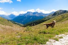 IMG_6664 (rickyrebora) Tags: col basset sauze doulx sestriere summer mountain montagna prati