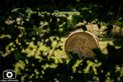 Spying (Slayce) Tags: frame framed countryside natur nature haystack tree trees