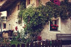 * (clo dallas) Tags: maso outdoor rustico rustic garden giardino fiori flowers nature garten gerani