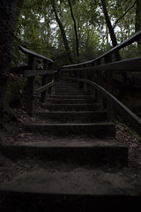 IMG_8358 (awebbMHAcad) Tags: underexposure tree trees leaf leaves plant plants stairs staircase stone stones stonestairs stonestaircase railing forest