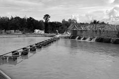 ไชโยฟาร์ม สร้างระบบคุมน้ำ100 % เลี้ยงกุ้งแบบหนาแน่น บ่อ 4 ไร่ ผลผลิต 25 ตัน
