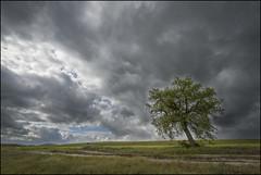 Se avecina tormenta 4 (Jose Cantorna) Tags: nikon paisaje campo prado euskadi araba hierba álava serenidad d610