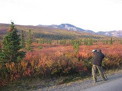 Denali National Park (lauriefoudin) Tags: park trip autumn trees red vacation mountains cold color colors yellow alaska scenery photographer getaway scenic national valley denali denalinationalpark clearskies
