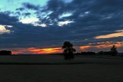 Countryside (Erich Hochstöger) Tags: trees sunset tree field clouds landscape lumix austria evening abend österreich sonnenuntergang wolken farmland panasonic landschaft bäume baum niederösterreich hdr acker abendrot loweraustria mostviertel fz150 ackerland