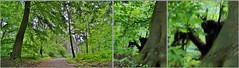 Creepy Photo (farmspeedracer) Tags: shadow tree green mystery germany landscape spring scary woods forrest secret may mysterious horror demon devil creature bigfoot scare