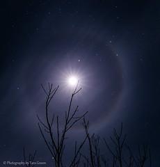 Moon Halo! (Photography By Tara Gowen) Tags: longexposure blue moon tree night nikon australia nsw nightsky moonhalo yarrahapinni tokina1116mm taragowen photographybytaragowen