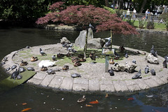 P1280511 (Jusotil_1943) Tags: isla tortugas agua palomas patos parque