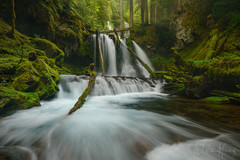 Chutes and Ladders (Willie Huang Photo) Tags: oregon pacificnorthwest waterfall panthercreek washington columbiarivergorge green water forest landscape nature scenic