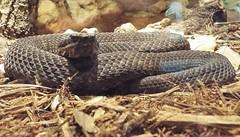 DSCF0181 (Stonehenge 68) Tags: zoo birmingham snake alabama lizard plantation antebellum birminghamzoo arlingtonhouse