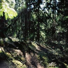 Nuuksion Kansallispuisto (soreikea) Tags: 2015 zenzabronica s2 film analog kodak portra160 helsinki finland nuuksionkansallispuisto travel