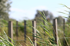 IMG_6877 (echoey13) Tags: france grass canon fence dof depthoffield barbedwire friday barbed camargue hff happyfencefriday canon70d