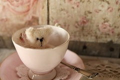 teddy bear tea... (s@ssyl@ssy) Tags: pink blush teeny tiny teddy bear vintage teacup antique mohair